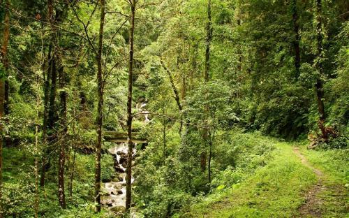 Chalsa Forest