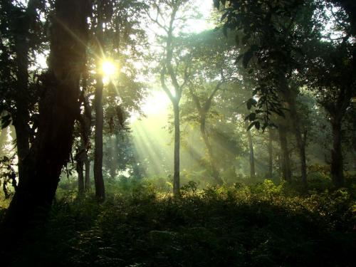 First light in Chilapata Jungle