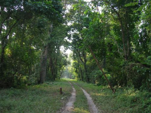 Gorumara Deep Forest