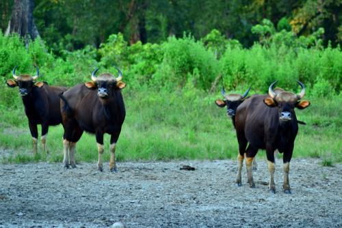 jaldapara-wildlife-sanctuary-