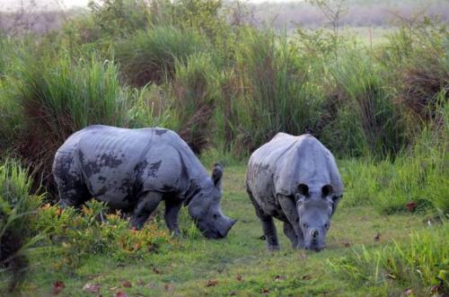 Rhino Watch at Chapramari