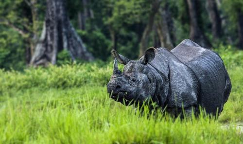 Rhinos-in-Jaldapara