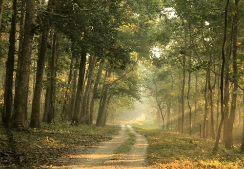 The forest road, Chilapata