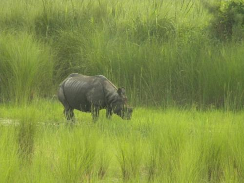 chilapata-jungle