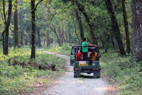 Jungle Safari Gorumara National Park