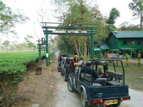 Jungle Safari at Gorumara Jungle